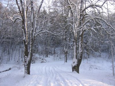 winter, snow, cold, frost, wood, frozen, ice, tree, landscape, forest