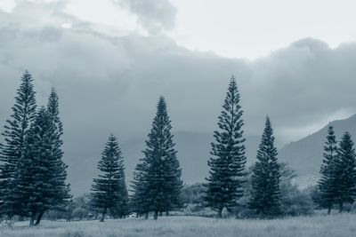 snow, winter, wood, nature, fog, tree, dusk, cloud, conifer, spruce