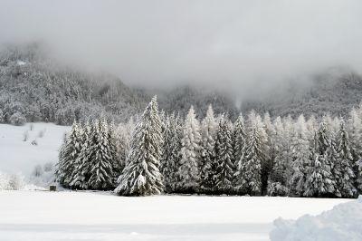 сняг, зима, студ, студ, мъгла, замразени, пейзаж, дърво