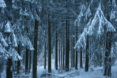 snow, winter, wood, cold, frost, tree, frozen, ice, landscape, conifer