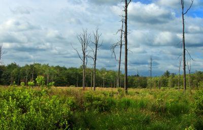 Baum, Landschaft, Natur, Holz, Himmel, Feld, Rasen, Wiese