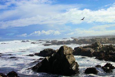 air, laut, laut, pantai, pesisir, lanskap, pantai, batu, burung