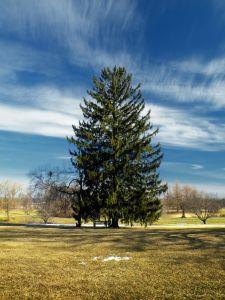 paysage, arbre, nature, herbe, été, ciel, champ, conifère, nuage