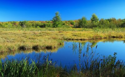 reflection, landscape, water, lake, nature, marsh, river