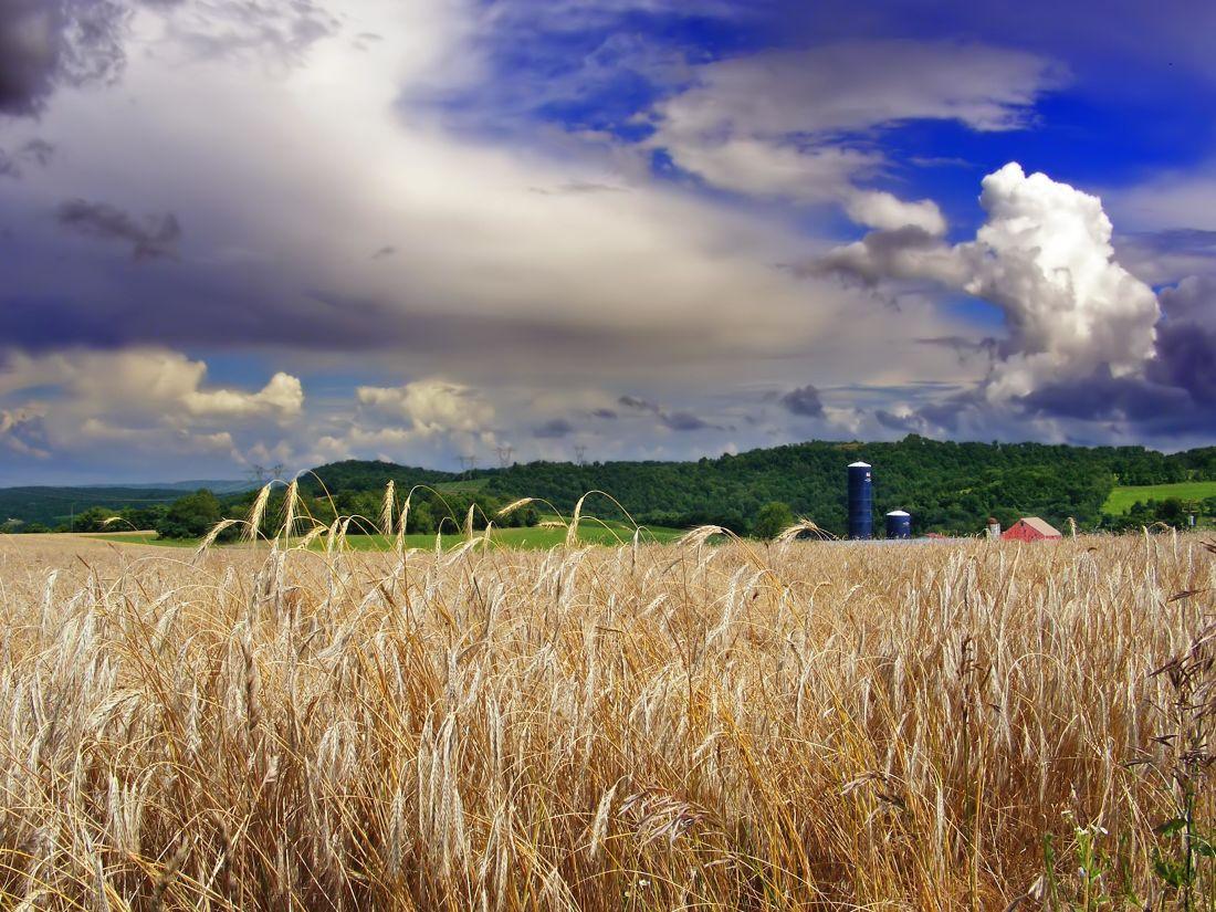 Cloud, venkova, kukuřice, sluneční svit, zemědělství, venkov, pole