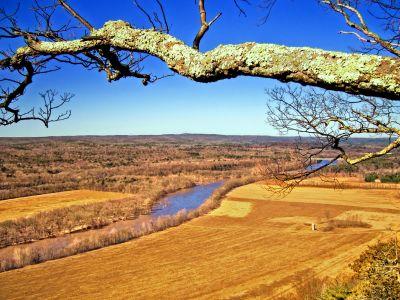 arbre, paysage, nature, ciel, rivière, ciel bleu, branche, écorce