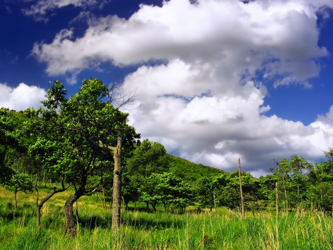 nature, landscape, grass, summer, sky, meadow, field