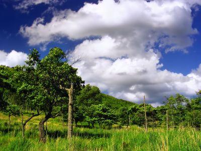 Natur, Landschaft, Rasen, Sommer, Himmel, Wiese, Feld