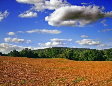 táj, természet, ég, mező, fű, rét, vidéki
