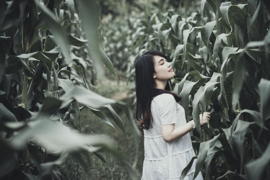 mujer, campo, maíz, gente, niña, retrato, naturaleza, al aire libre, persona