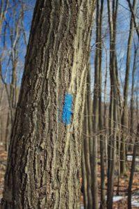 树, 木头, 树皮, 自然, 环境, 室外, 植物, 标志