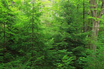 wood, leaf, nature, landscape, tree, fern, moss, green, branch, conifer