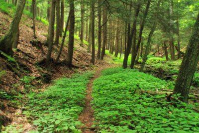 дърво, дърво, природа, пейзаж, листа, околната среда, горите, папрат, Мос