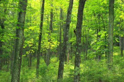wood, landscape, tree, nature, leaf, environment, forest, wood
