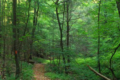 wood, nature, leaf, landscape, tree, forest trail, green, forest
