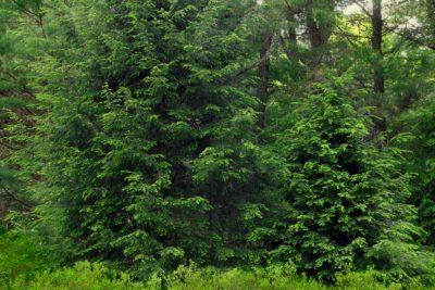 wood, tree, landscape, branch, green leaves, nature, leaf, forest, plant, outdoor