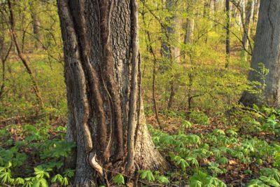wood, tree, nature, leaf, bark, flora, oak, branch, daylight, landscape, environment