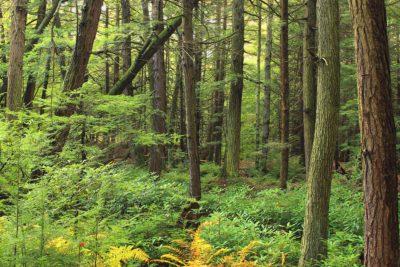 drevo, strom, krajina, moss, papraď, tráva, príroda, leaf, prostredie