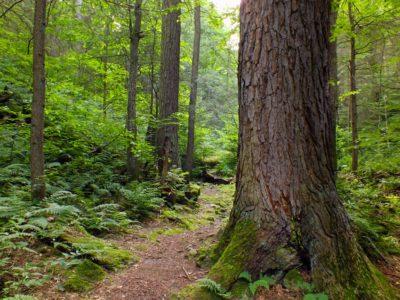 wood, tree, environment, bark, fern, forest, nature, leaf, landscape