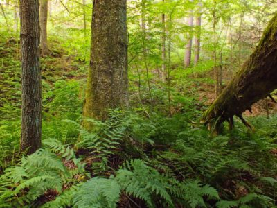 wood, fern, leaf, tree, wilderness, nature, rainforest, moss, daylight