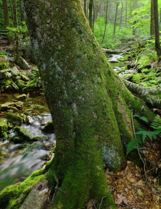 forest, wilderness, wood, moss, tree, nature, leaf, landscape, rain, fern