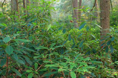 leaf, wood, tree, nature, summer, branch, landscape, rainforest, flora, environment