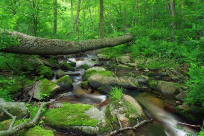 drewno, natura, liść, wody, drzewo, Mech, strumień, krajobraz
