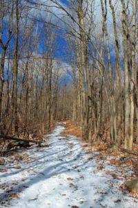 neige, piste forestière, bois, nature, paysage, arbre, hiver