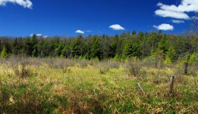 landschap, natuur, hout, boom, hemel, gras, veld, weide