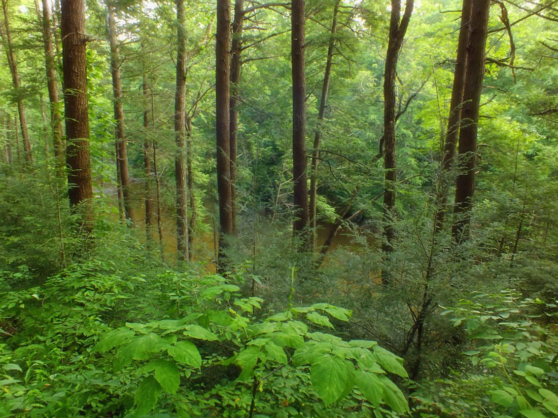 дърво, природа, листа, пейзаж, дърво, гори, околна среда