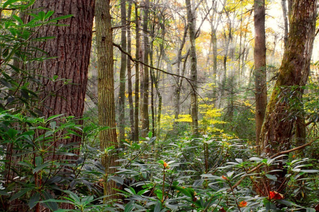 папрат, цветя, мъх, слънце, екология, дърво, дърво, пейзаж, листа, природа