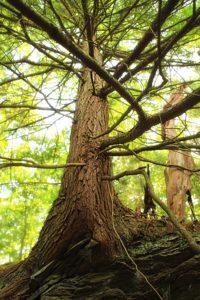 дървен материал, дърво, листа, клон, корен, природата, околната среда, кора, пейзаж