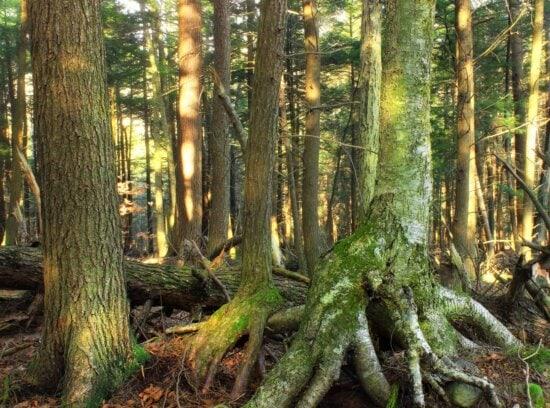 root, forest, wood, tree, nature, leaf, landscape, bark, moss, flora