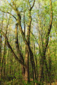 wood, tree, nature, landscape, leaf, environment, bark