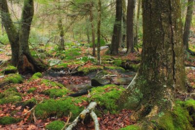 wood, root, moss, tree, nature, leaf, landscape, moss, environment