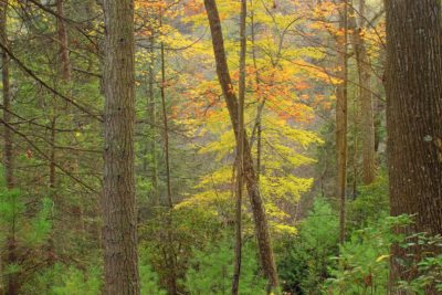 wood, autumn, forest, ecology, tree, leaf, nature, landscape, forest