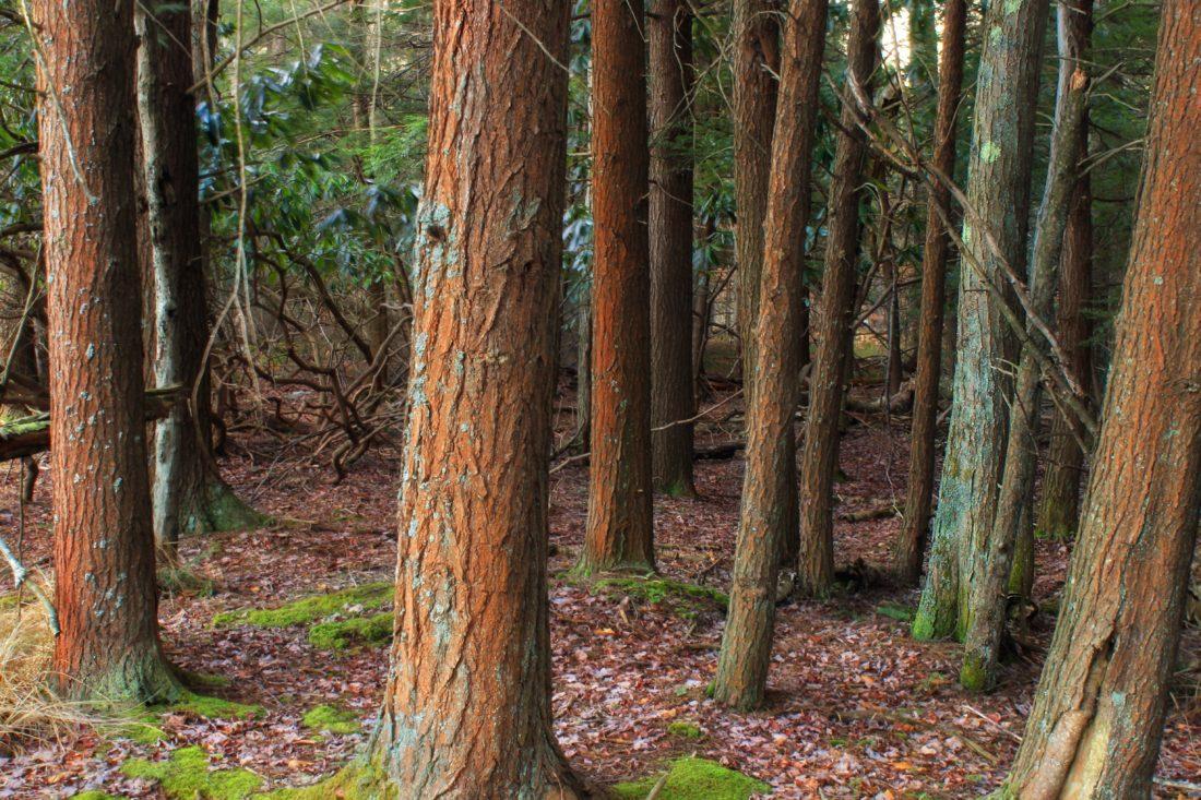 дърво, дърво, листа, горски, кора, природа, пейзаж, околна среда