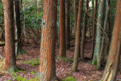 wood, tree, leaf, forest, bark, nature, landscape, environment