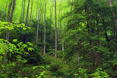 wood, moss, fern, spring, ecology, nature, tree, leaf, landscape