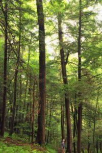 bois, arbre, nature, paysage, feuille, forêt, fougère, environnement