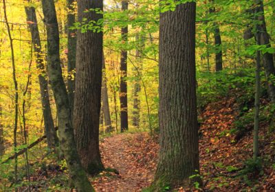 autumn, ecology, wilderness, wood, leaf, tree, nature, landscape, forest, autumn