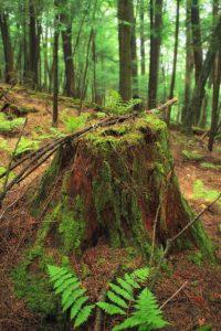 bois, mousse, végétation, nature, arbre, feuille, environnement, fougère, paysage