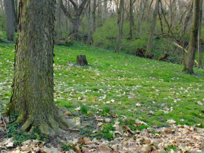 meadow, wood, ecology, tree, nature, landscape, leaf, environment, forest
