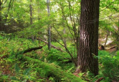spring, moss, wood, tree, nature, landscape, leaf, environment, forest