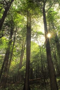 wood, nature, sunshine, wilderness, tree, landscape, leaf, sun, environment