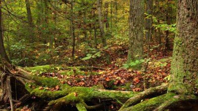 wood, leaf, tree, moss, bark, wilderness, nature, landscape, moss, forest, grass