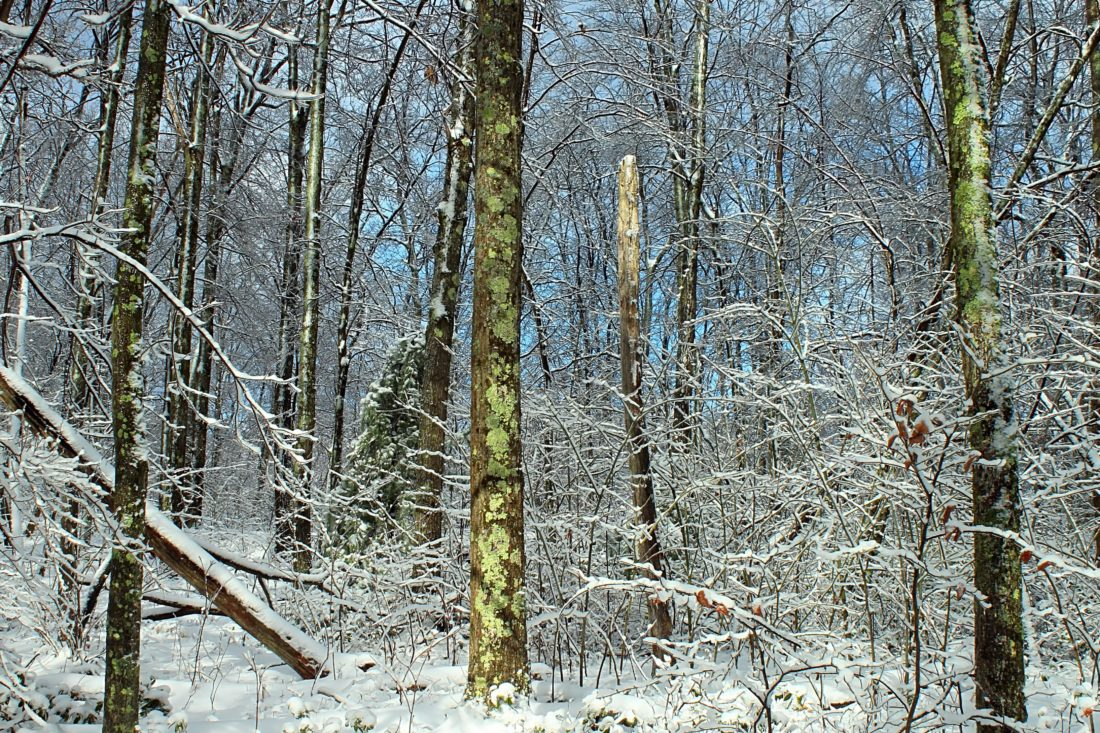 wood, winter, tree, nature, snow, landscape, frost, branch