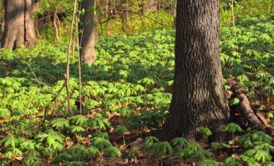 dřevo, strom, listy, příroda, krajina, venkovní, travní, dubový, mech