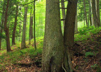 дървен материал, дърво, природа, листа, мъх, пейзаж, кора, трева, Открит