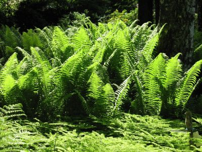 fern, nature, leaf, flora, wood, aquatic, plant, forest